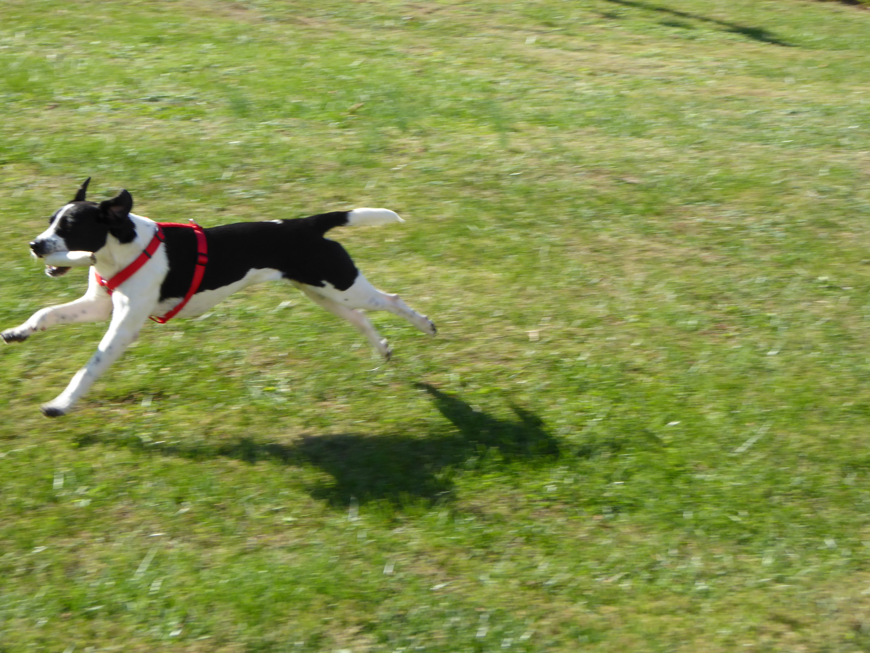 Volunteer Dog Walking Sydney
