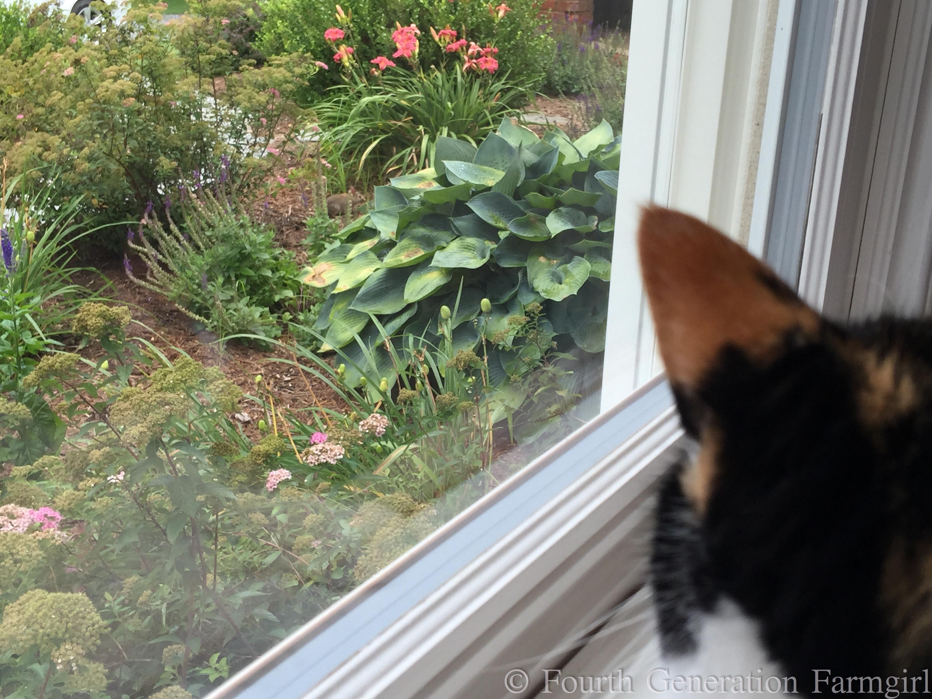 Dog Meows Like Cat Alarm Clock