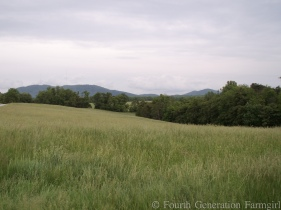 KONICA MINOLTA DIGITAL CAMERA