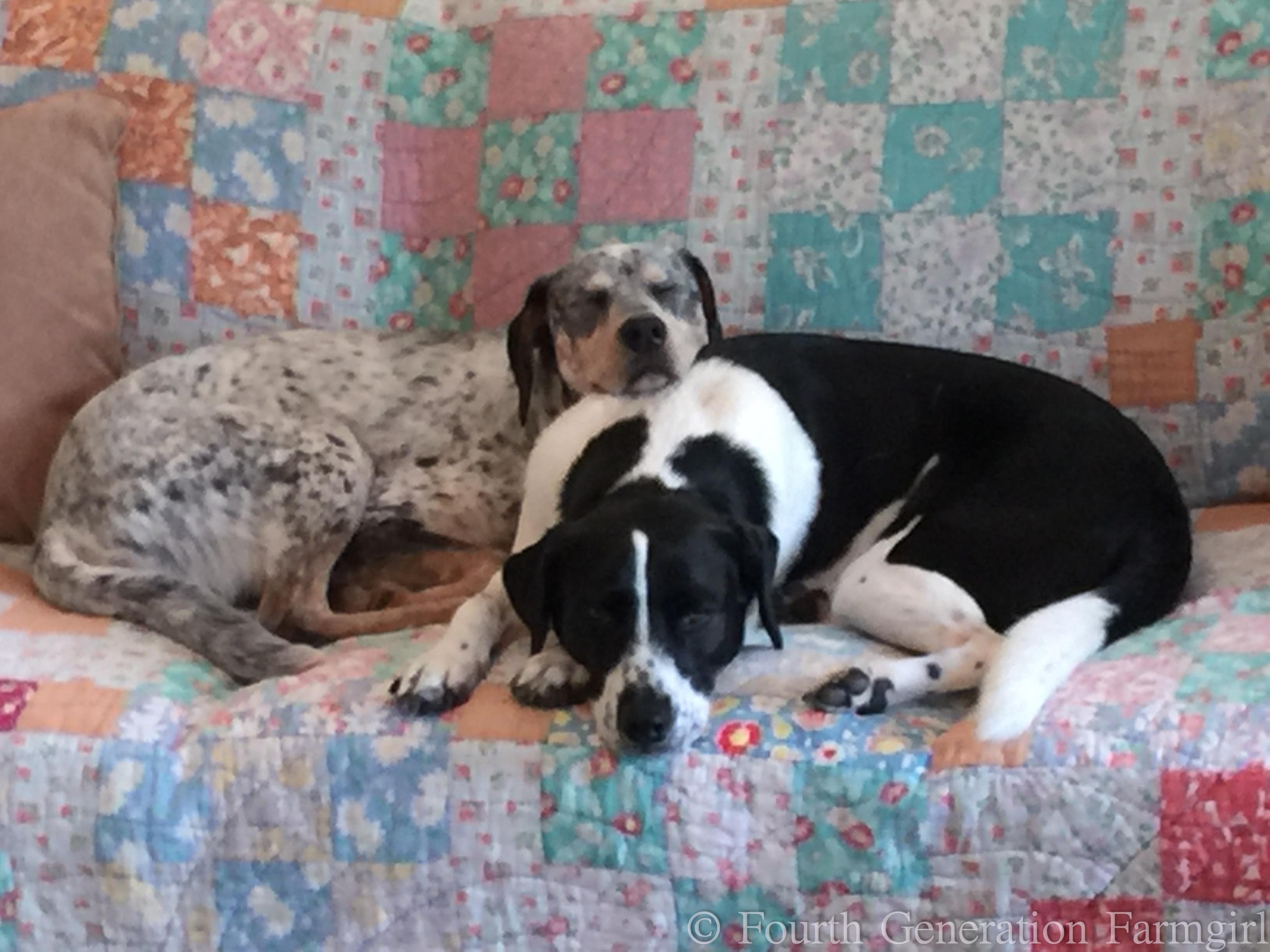 Dog Friendly Farm Cottages Dorset